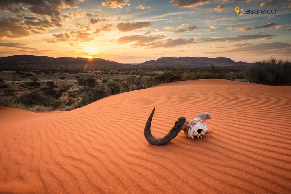 with this Botswana Safari
