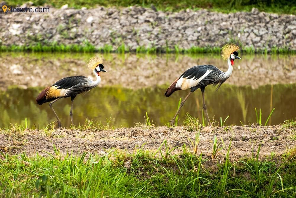 8-day Uganda Safari