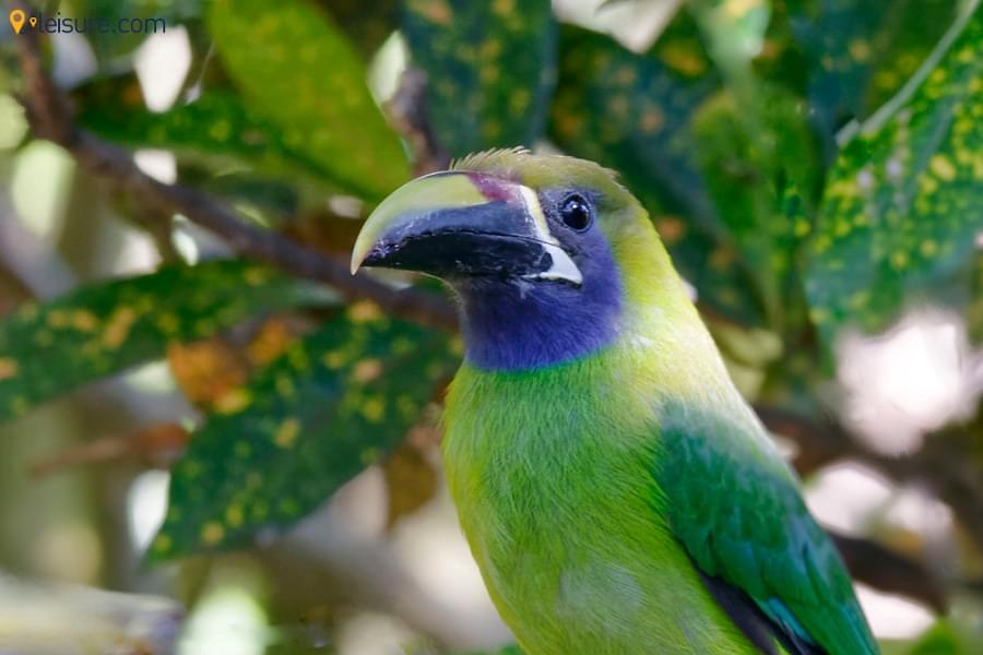 Costa Rica Tour kjb