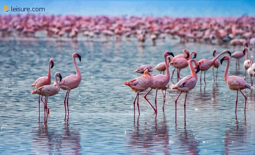 Luxury Kenya Safari Tour with Family