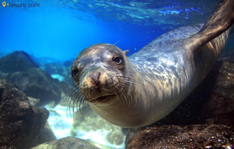 Galapagos Island Tour