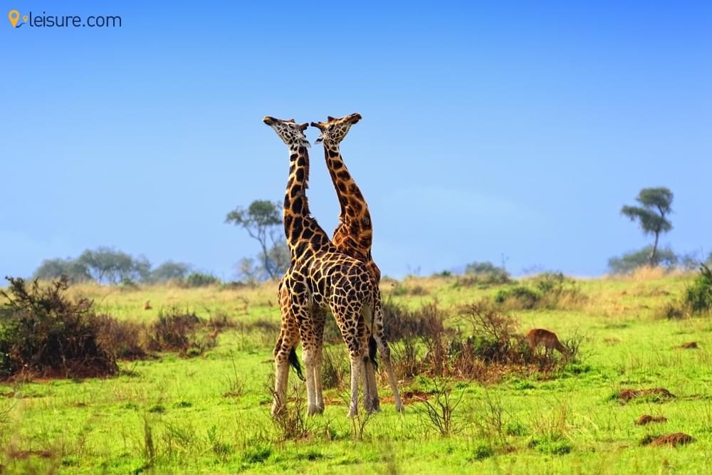 Uganda Tours: The Best Uganda Safari For Travelers
