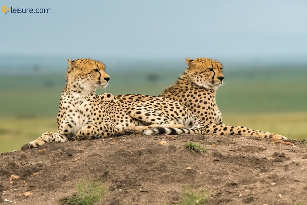 safari tours o