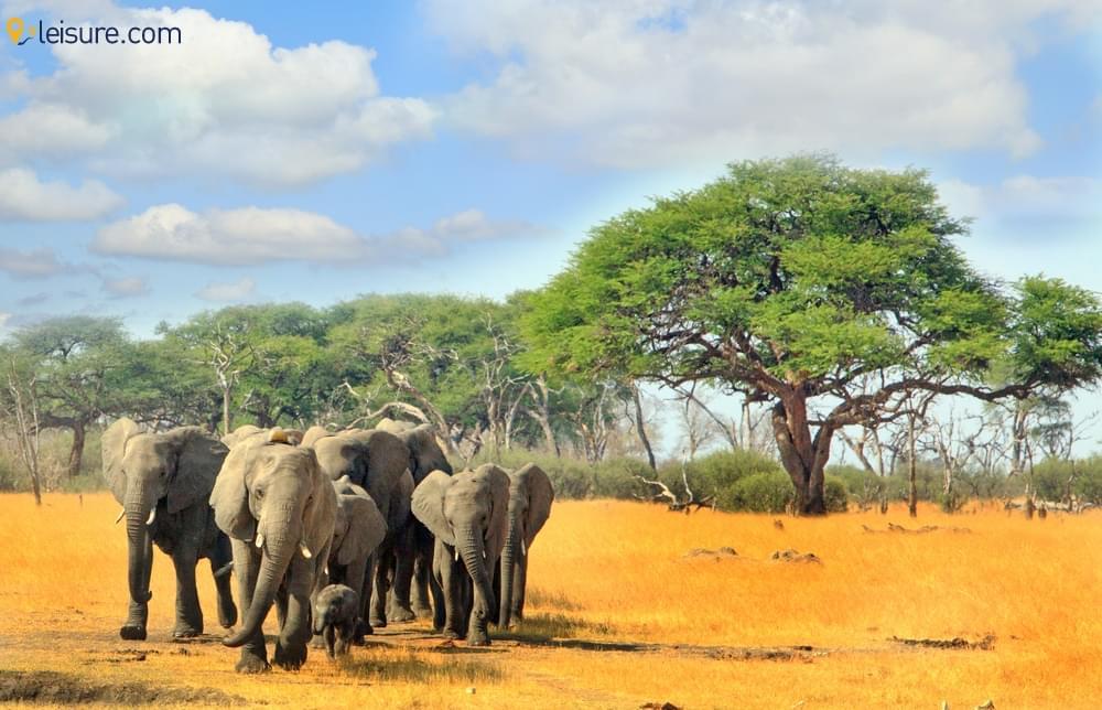 An Iconic Zimbabwe S