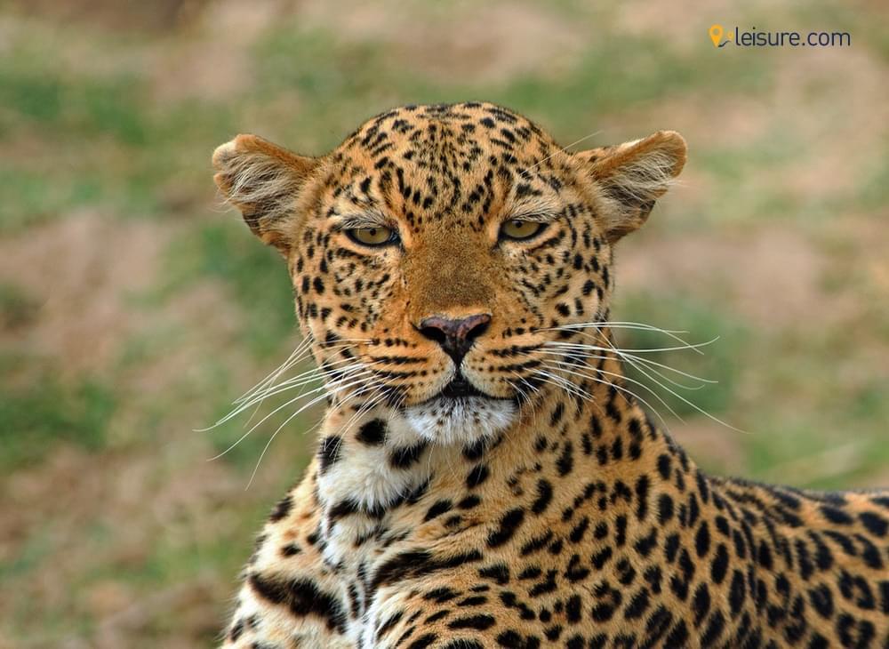 10-Days Zambia Safari for Couples