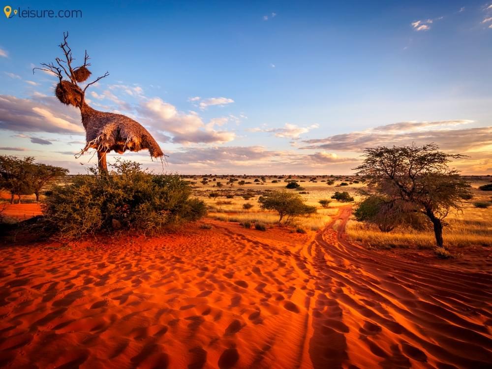 Botswana Safari Vacation P