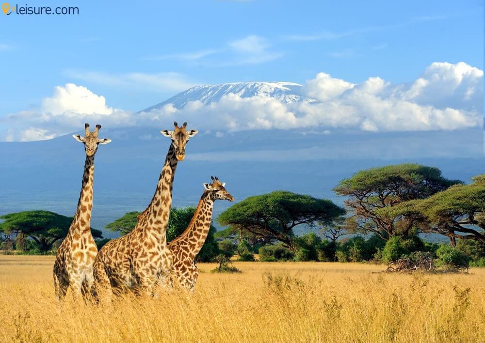 Mega African Safari 2
