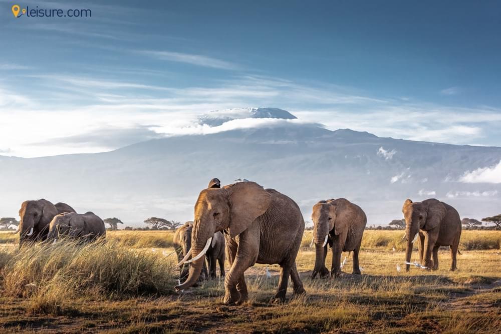 Tanzania Safari Vacations ddd
