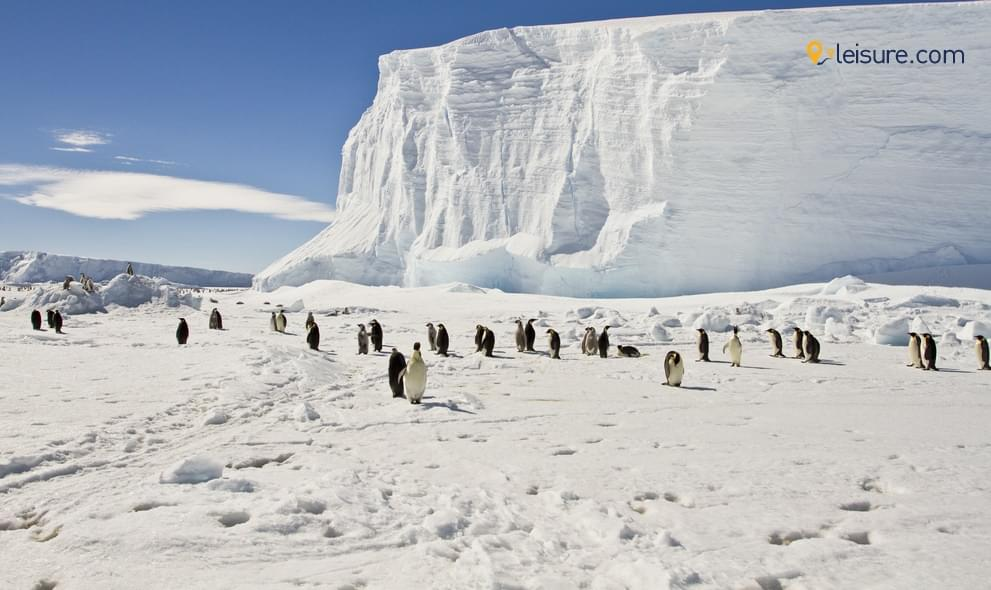 Antarctica Tour - A Lifetime Experience With Penguins And Wheals