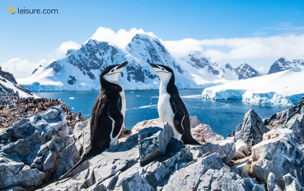 Travel Review: Exciting Antarctica Tour