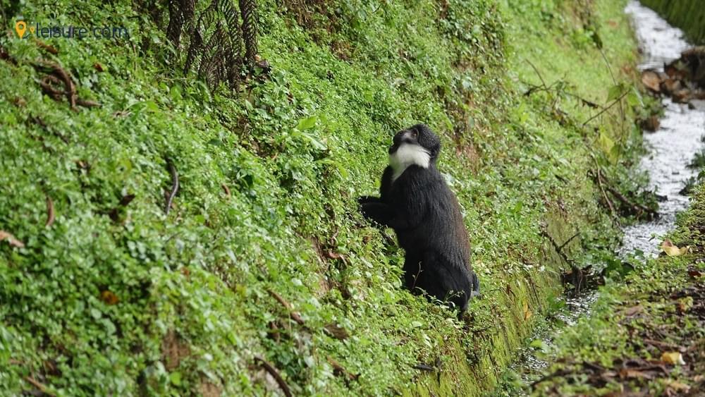 Trekking Tours in Rwanda s