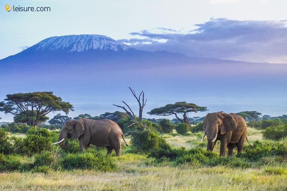 Kenya Safari Vacation d