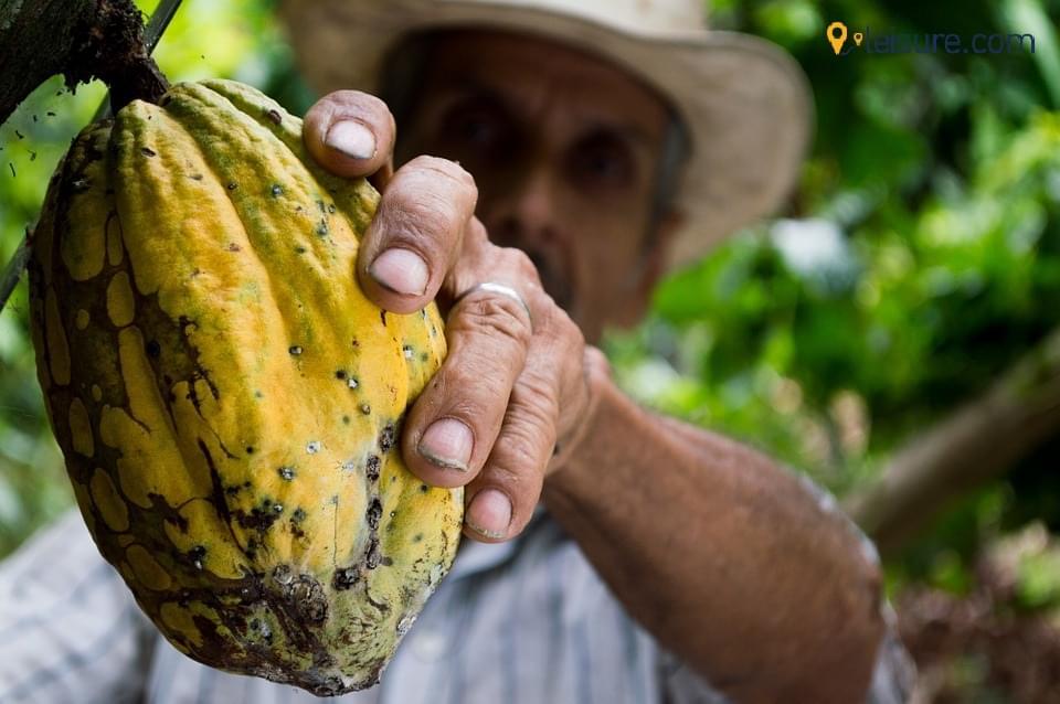 cocoa mann