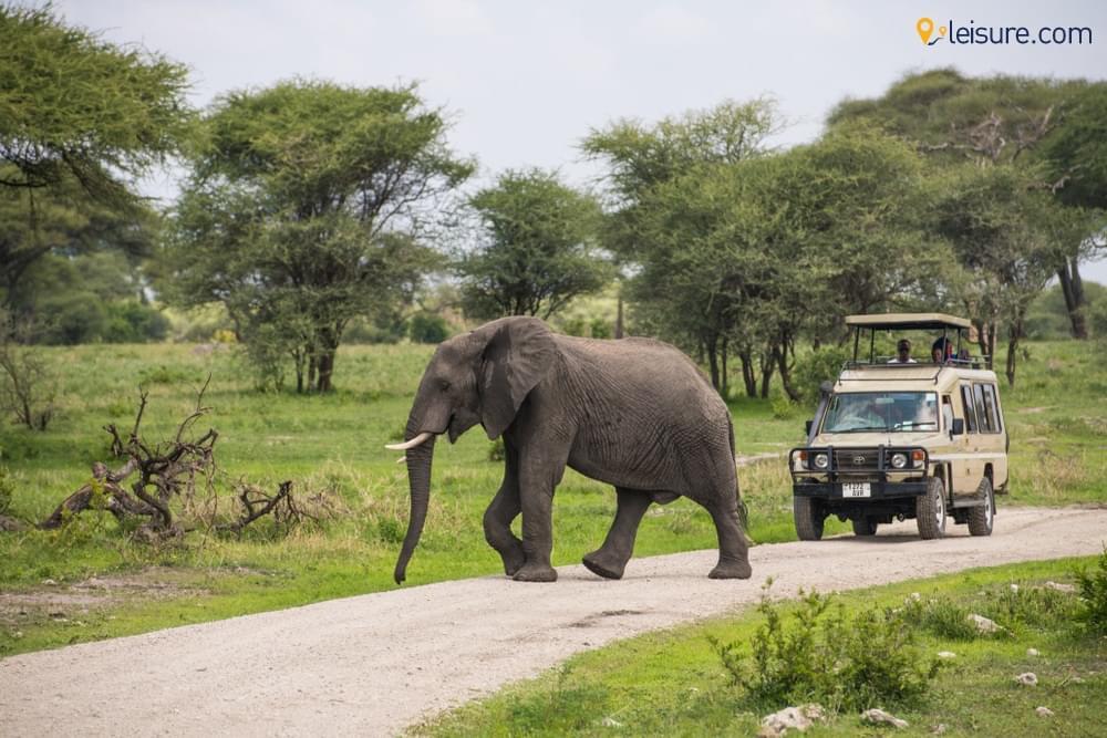 n Tanzania Safari