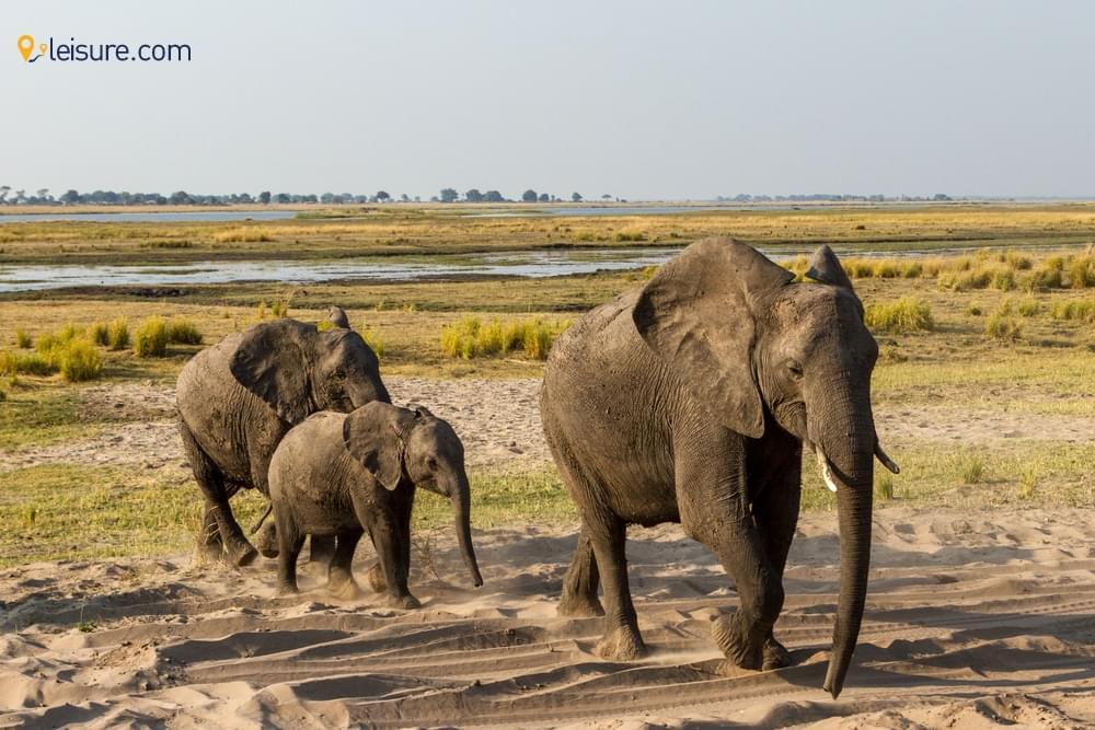 Visit in Botswana in 20d
