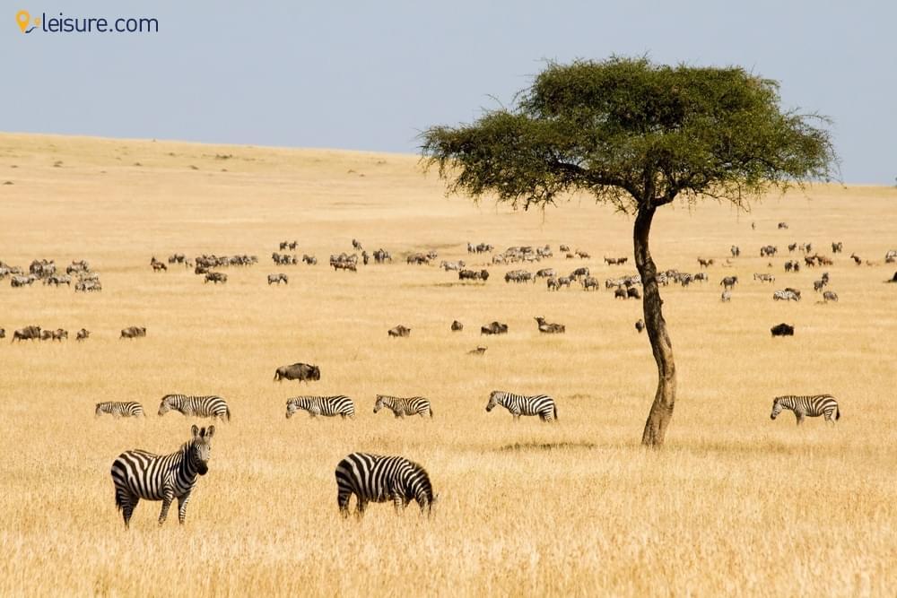 Maasai Mara and Rwanda