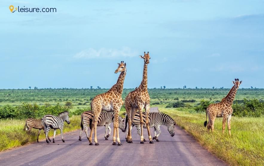 A Dream Safari In South Africa