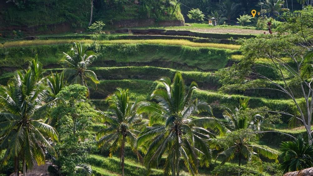 Bali in 2 Weeksv