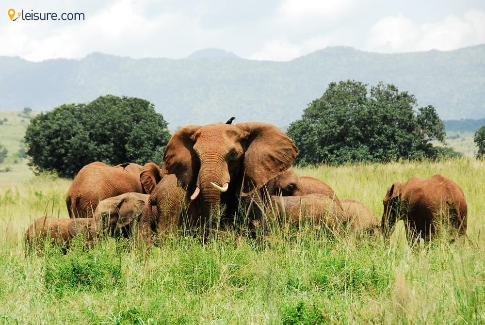 A 5-day Uganda Safari Itinerary to Explore