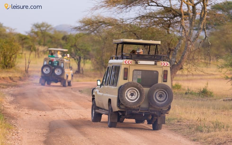 A Memorable Safari In Tanzania