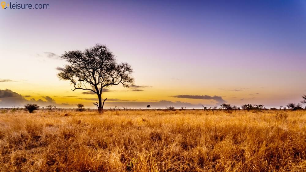 Mega African Safari 3