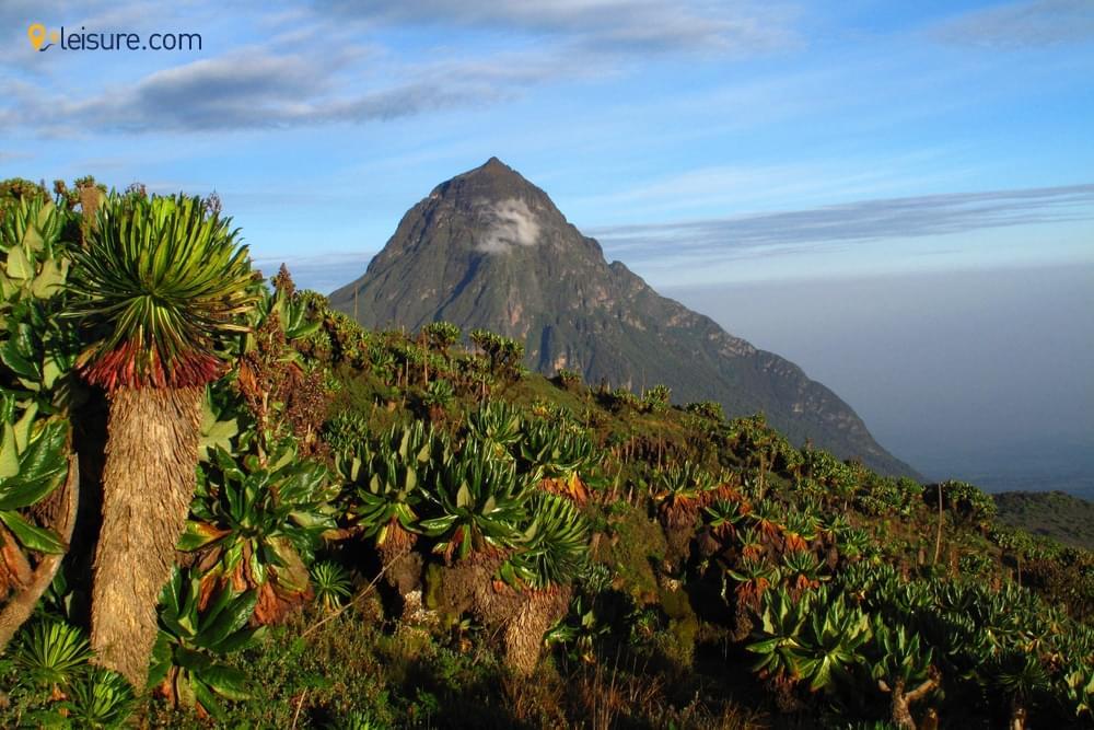 Rwanda Gorilla Trekking Itinerary