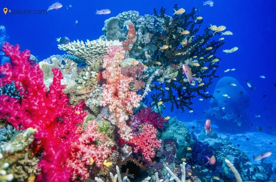 Fiji Vacation ert