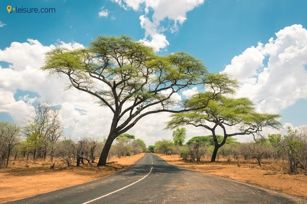 8-Days Zimbabwe Safari d