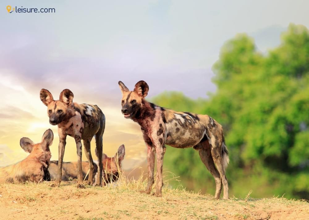 10-Days Zambia Safari for C