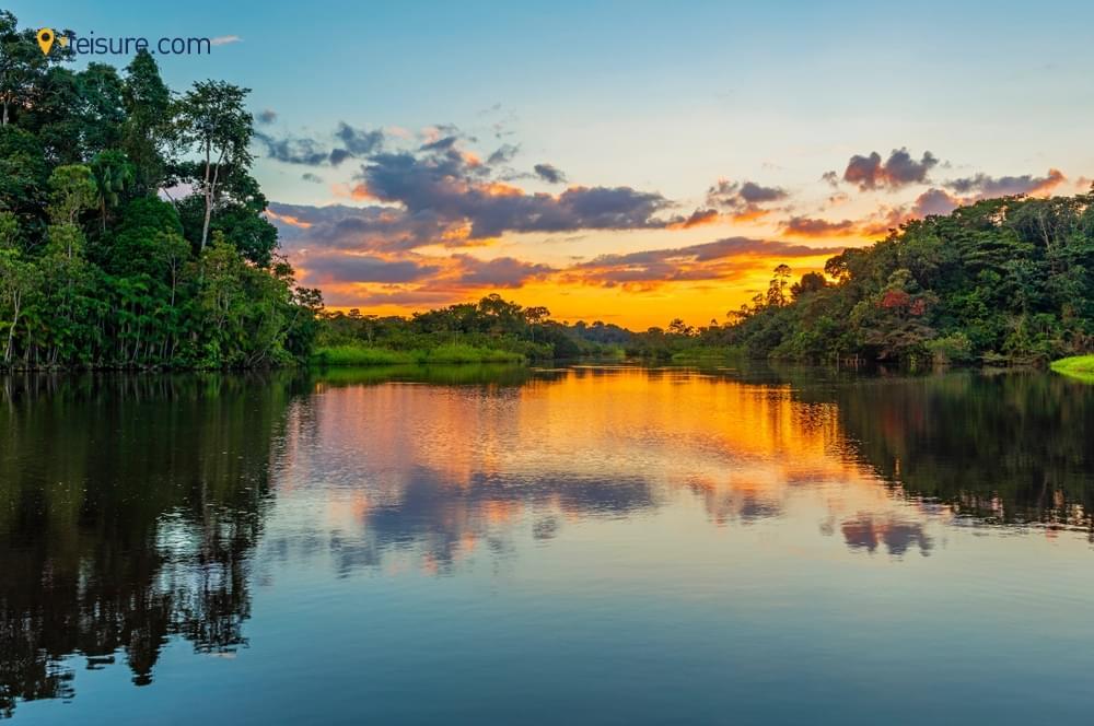 City To Amazon Rain Forest