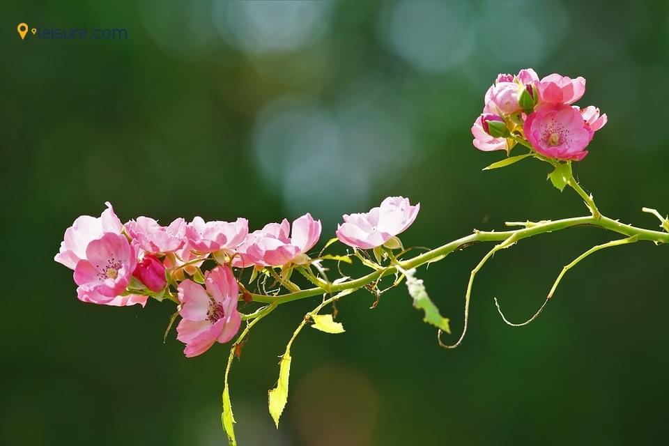 wildflower opp