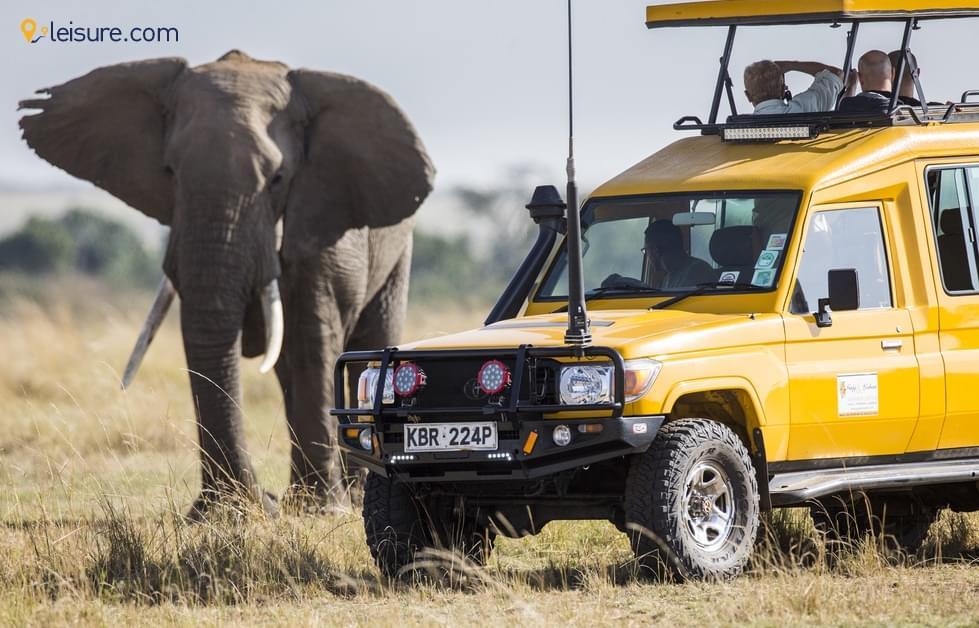 Exhilarating Safari Moments in Kenya
