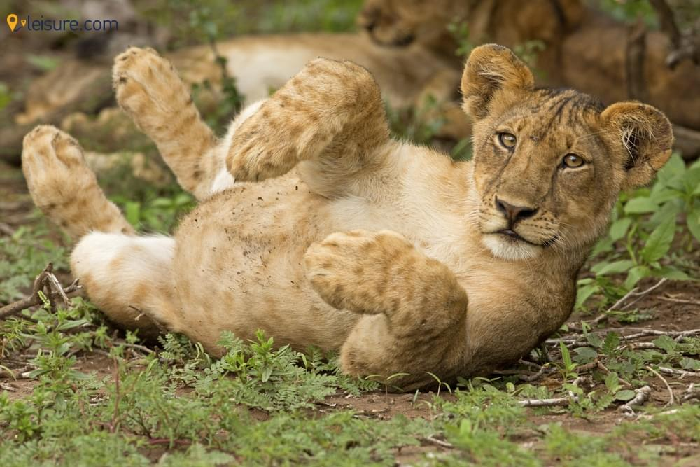 12-day Zimbabwe Safari Tour to Plan with Friends and Family