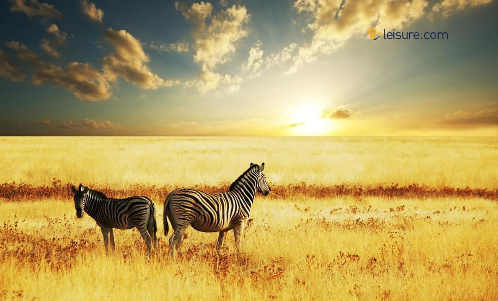 What A Perfect Tour To South African Safari?