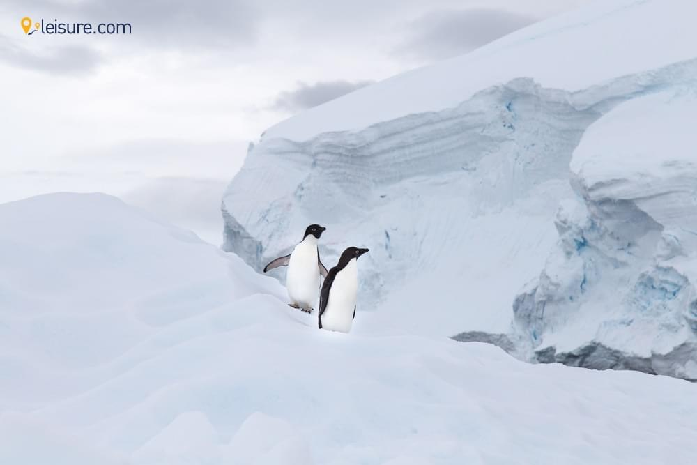 This Antarctica Travel Guidevvv