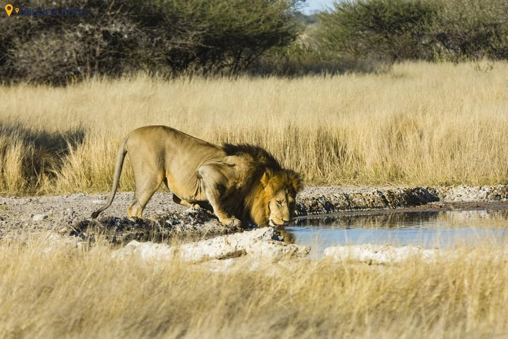 Botswana Safari Vacation Package d