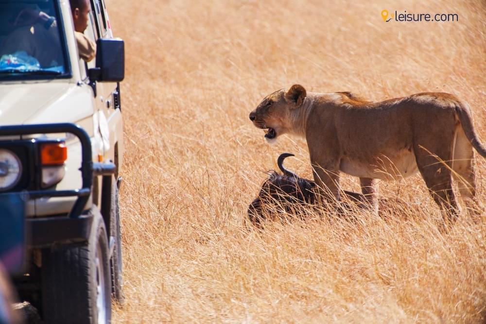 Safari Adventure to the Next Level d