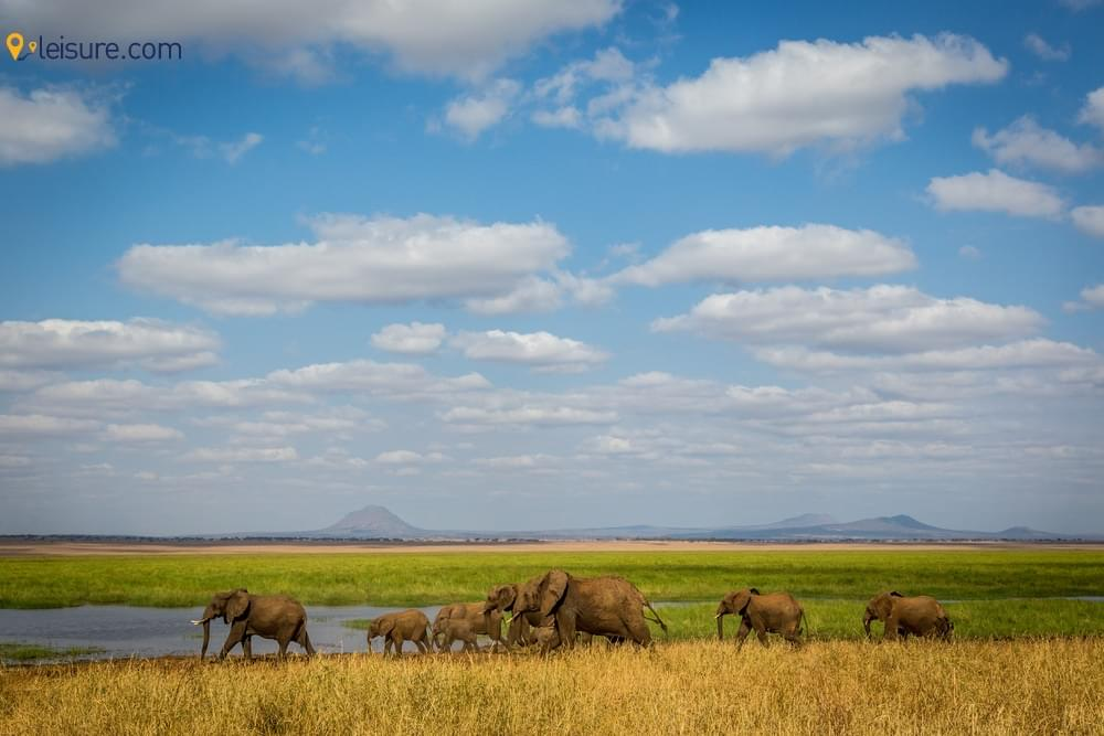 7-Days Honeymoon Tanzania Safari
