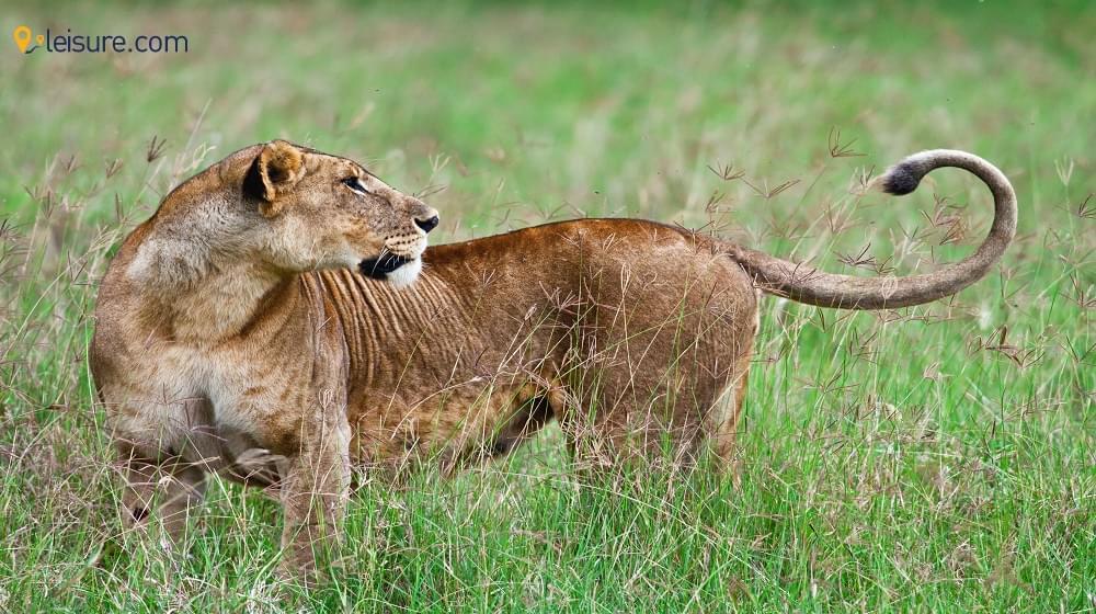 kenya explore