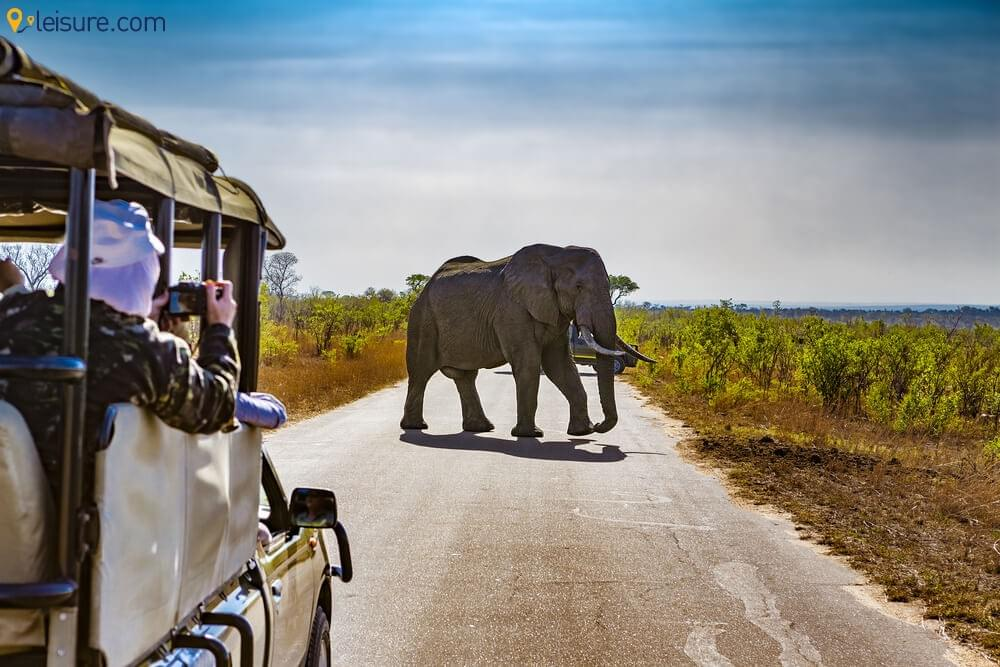Explore Africa like Never Before with this Mega African Safari Itinerary