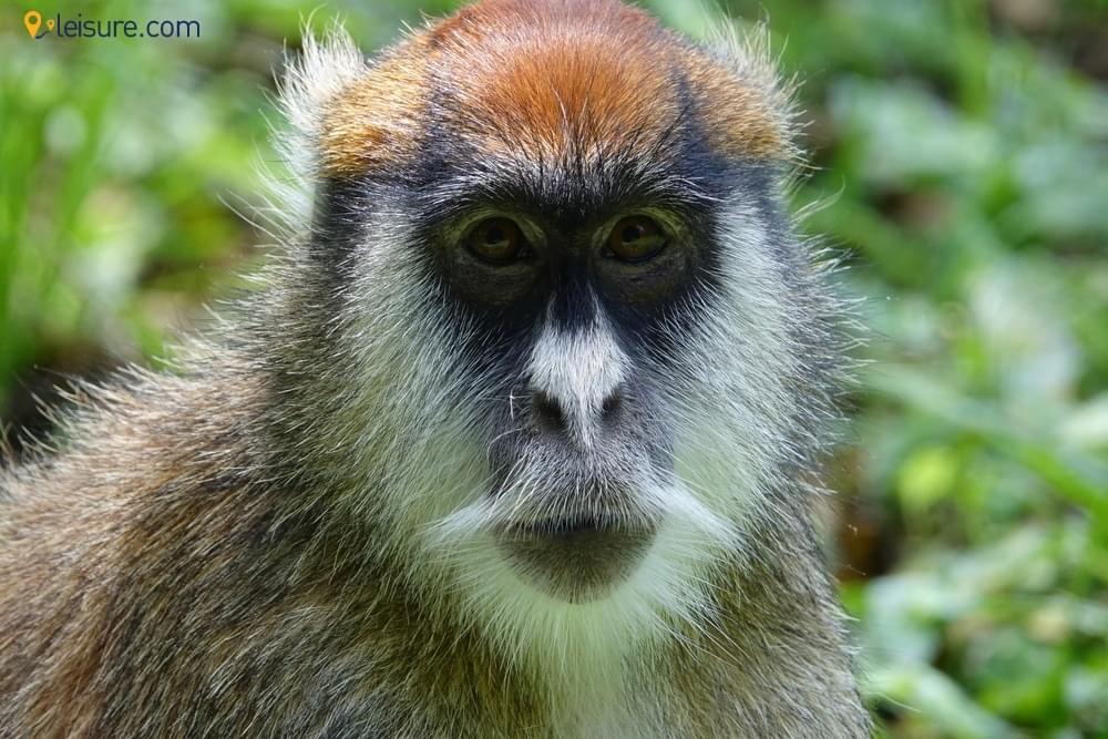 A 5-day Uganda Safari
