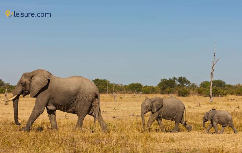 Unforgettable Experience of Zambia Safari Tour