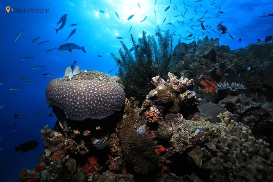 Fiji and Australia Vacation fg