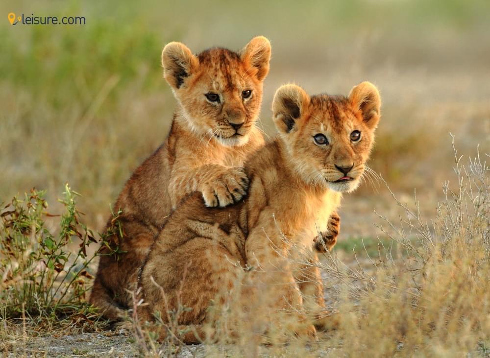 Safari Vacations