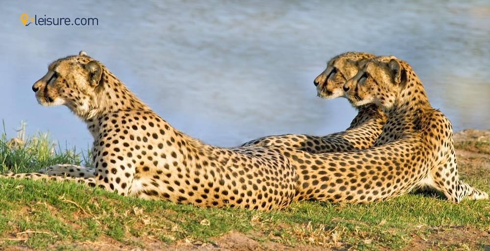 8-Days Zimbabwe Safari