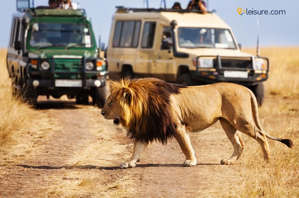 A Once-In-A-Lifetime Experience of Kenya Safari Tour