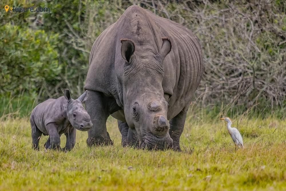 Wild in this Exquisite Uganda Safari