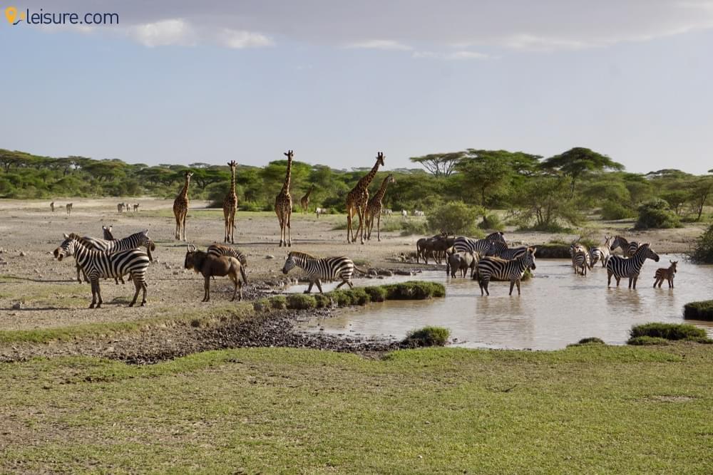 : Lake Manyara