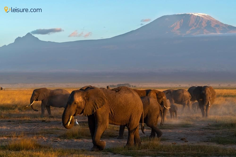 Tanzania Safari Vacations jh