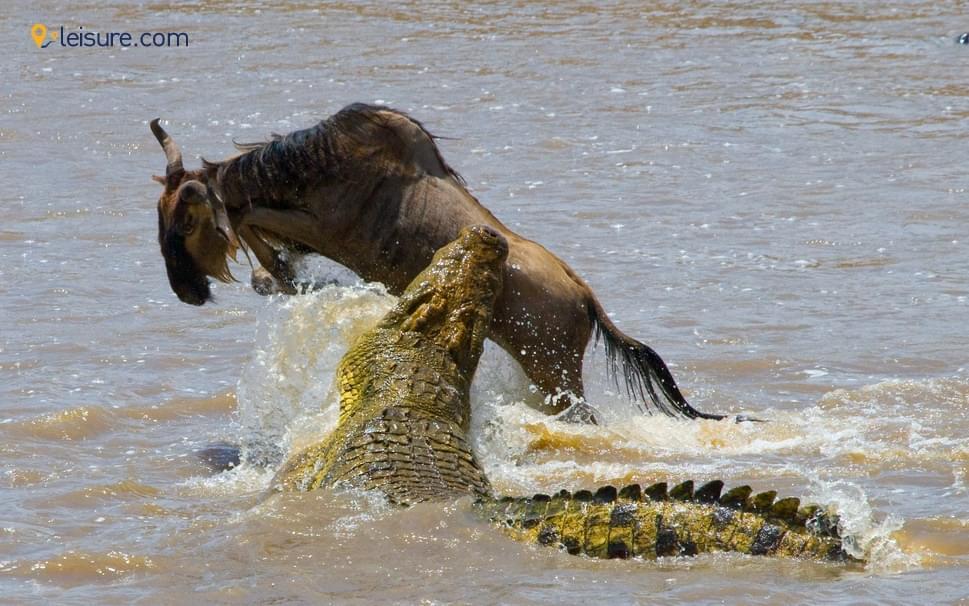 Fun Filled Tanzania Safari